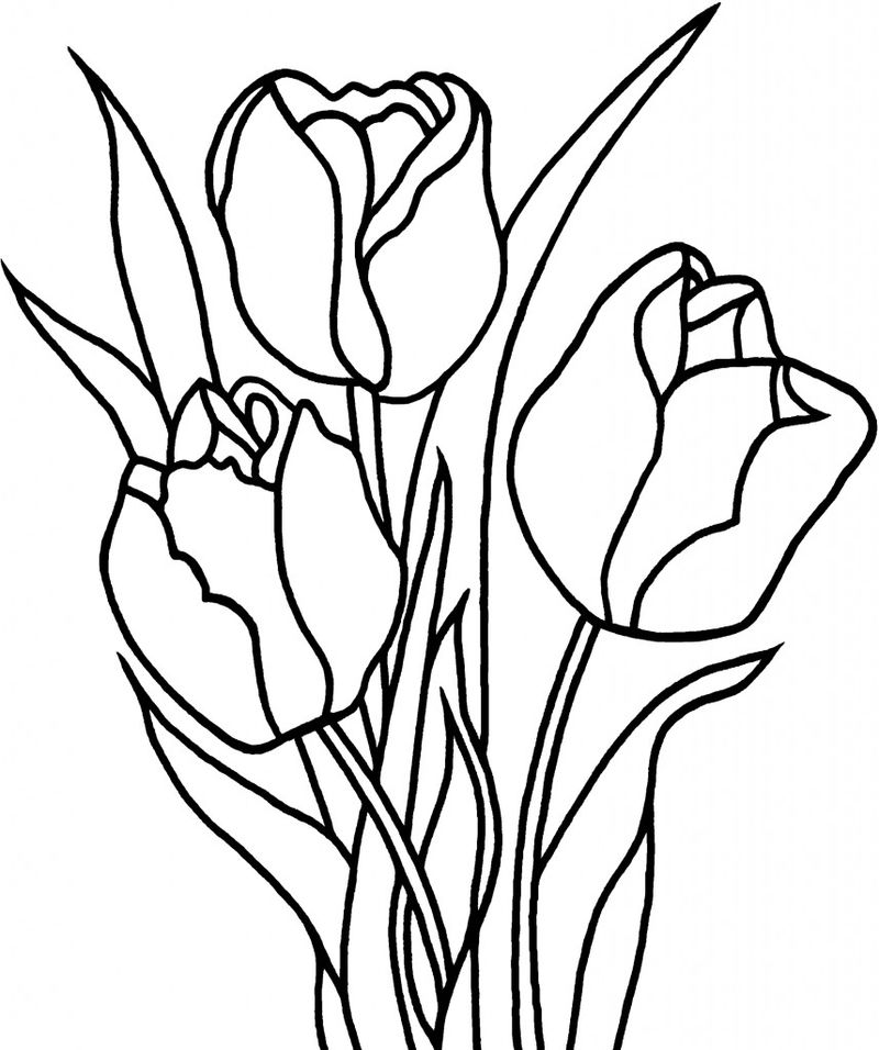 Printable tulip coloring pages for kids 001