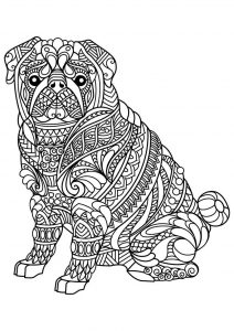 Pug animal coloring page for adults