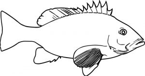 Realistic cartoon fish coloring page sheet
