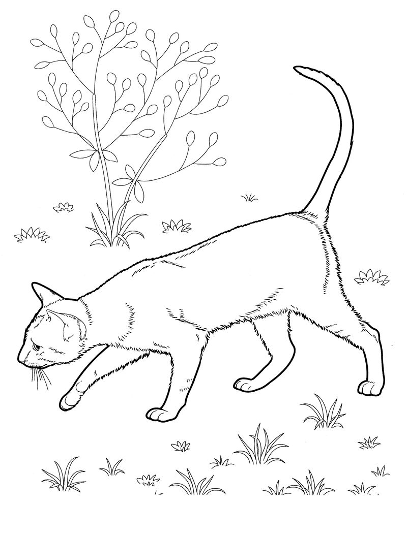 Realistic Cat Coloring Pages For Adults