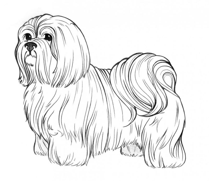 Realistic Dog Coloring Page For Adults