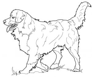 Realistic dog coloring pages for adults