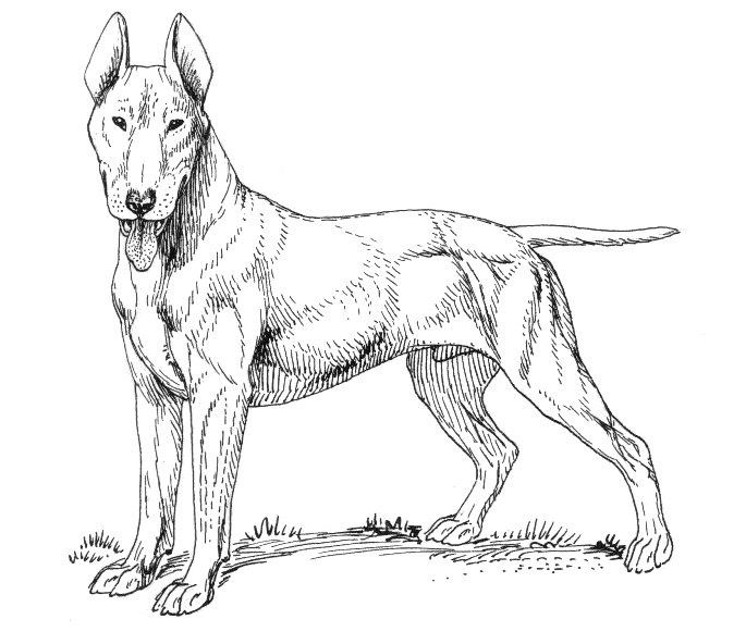 Realistic Dog Printable Coloring Page For Adults
