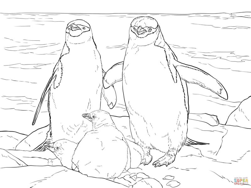 Realistic Penguin Family Coloring Pages