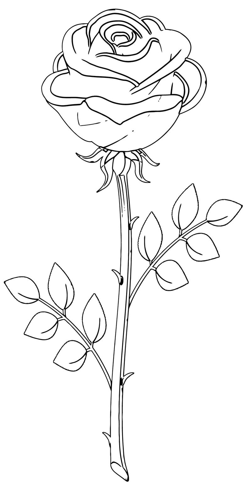 Rose Flower Coloring Page 020
