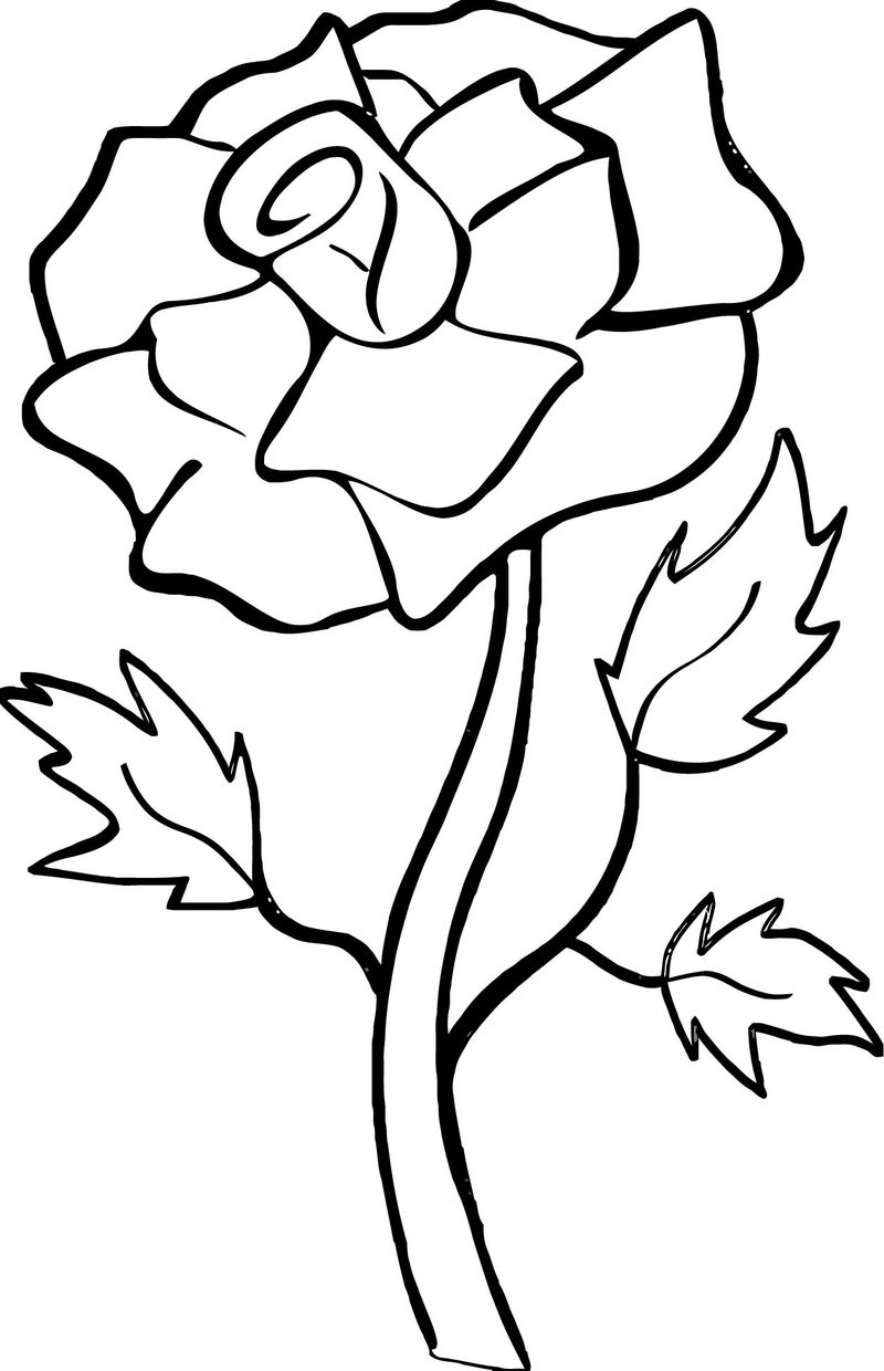 Rose Flower Coloring Page 045