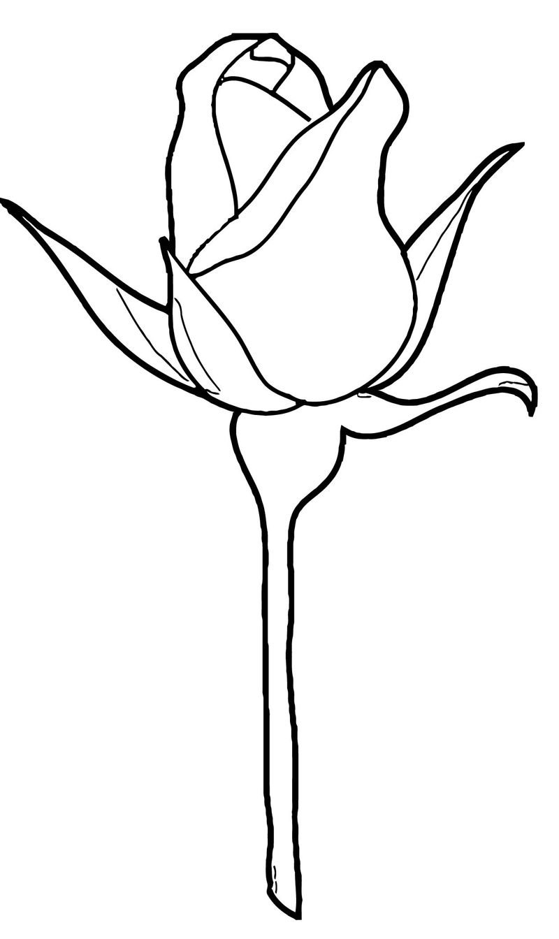 Rose Flower Coloring Page 152