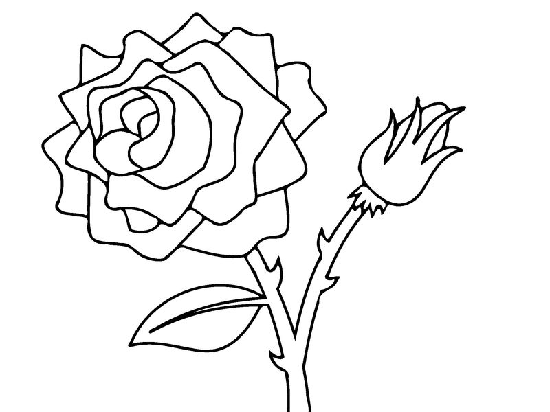 Rose Flower Coloring Pages 001