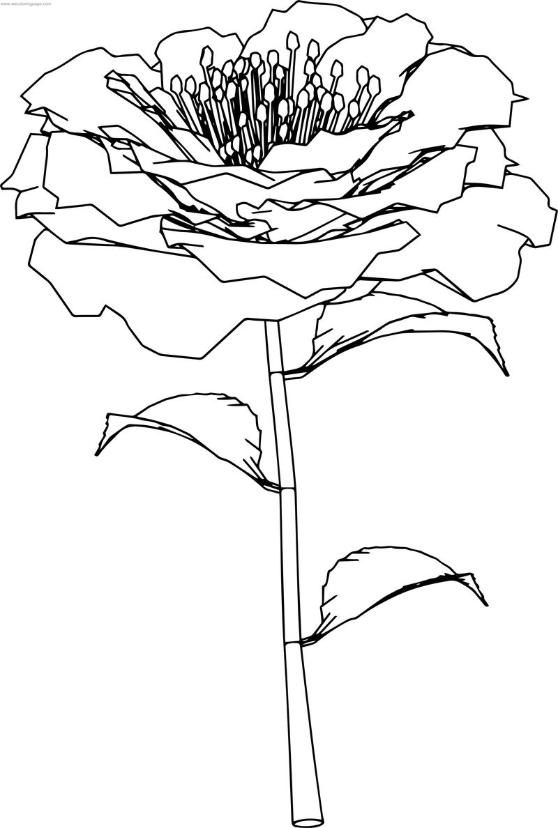 Rose Flower Perspective Coloring Page