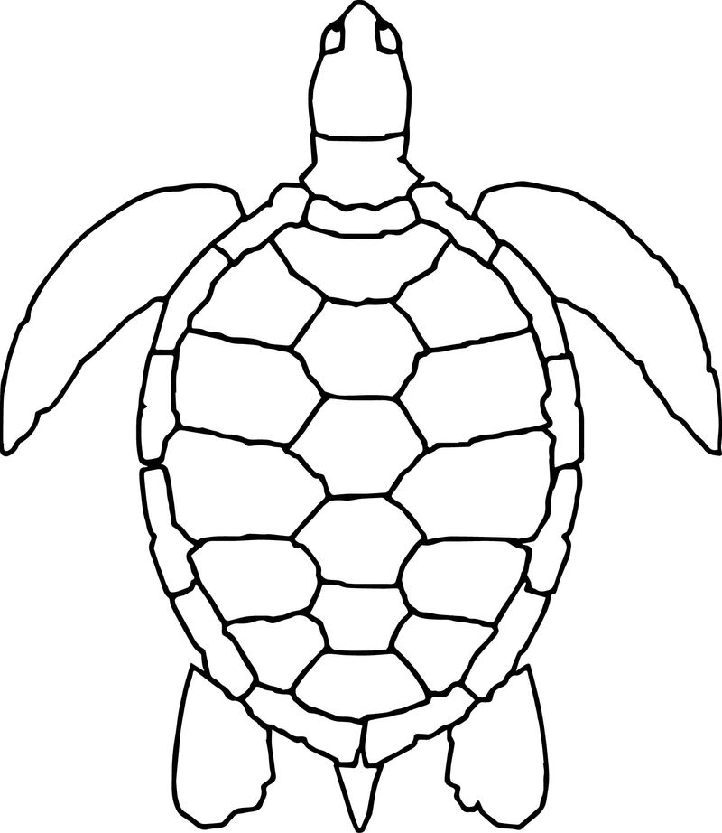Sea Animals Turtle Coloring Page