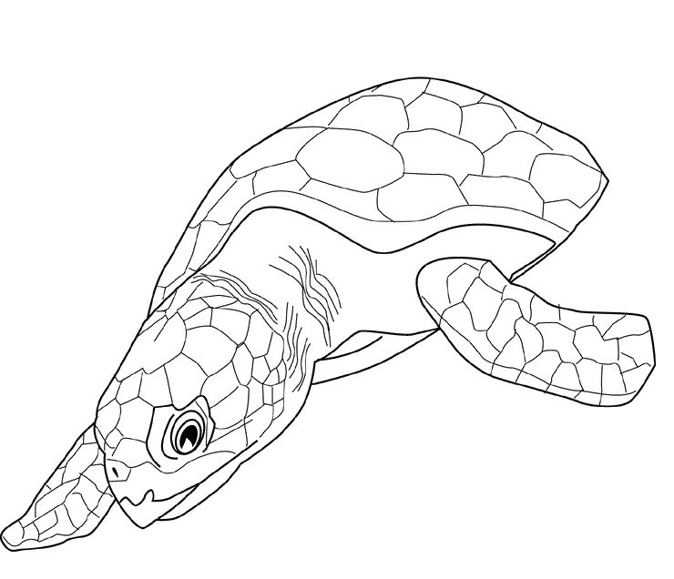 Sea Turtle Coloring Pages Printable 1