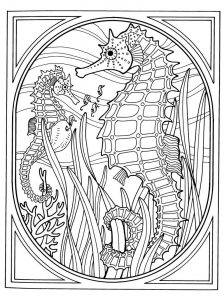 Seahorse coloring pages for adults