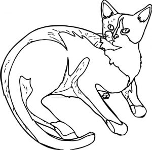 Self cat coloring page