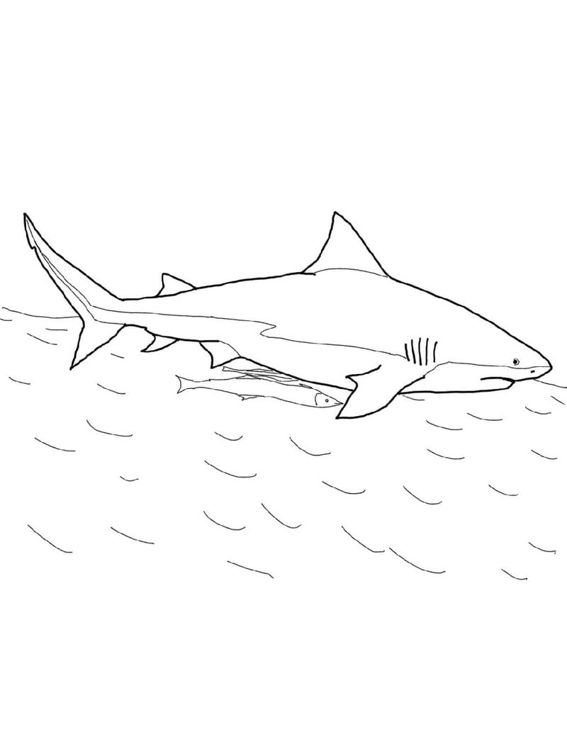 Shark Color Pages Simple - Coloring Sheets