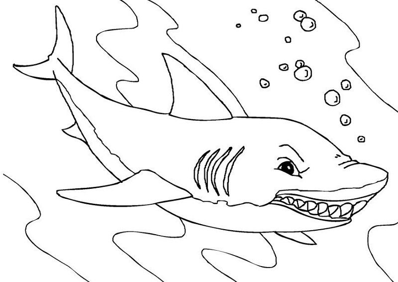 Shark sheets for kids coloring 001