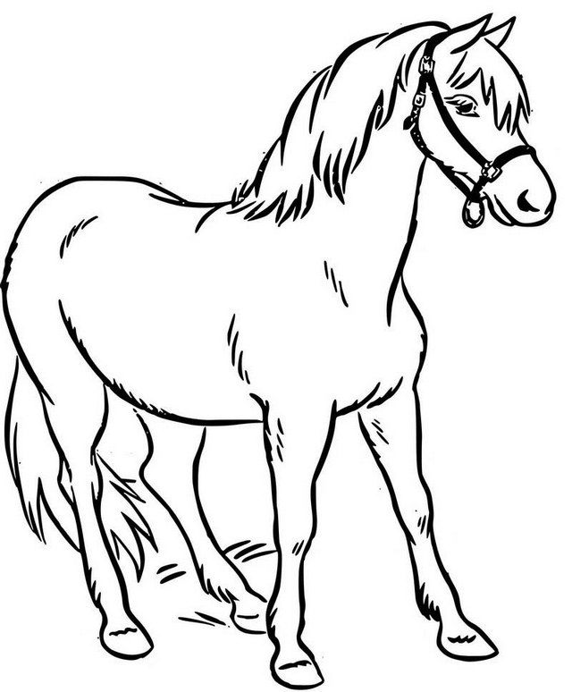 Simple Real Horse Coloring Page - Coloring Sheets