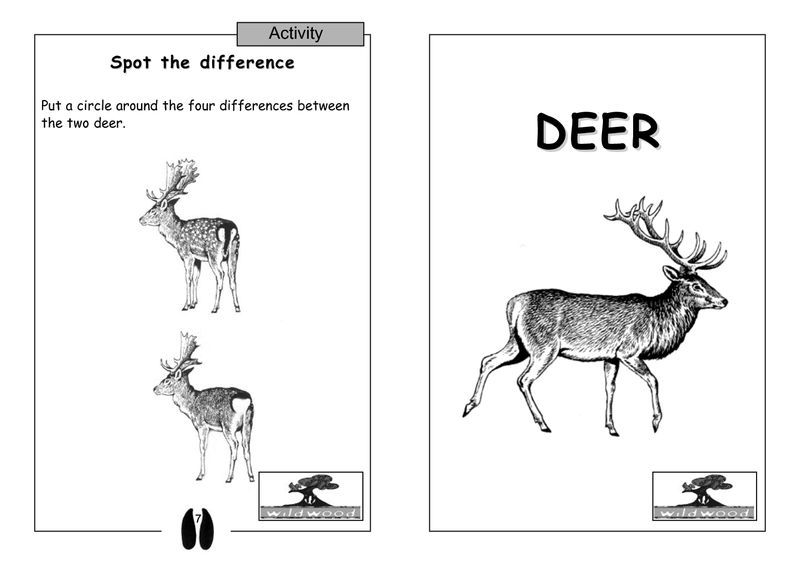 Spot The Difference Worksheets Deer