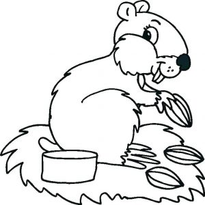 Squirrel baby animal coloring pages
