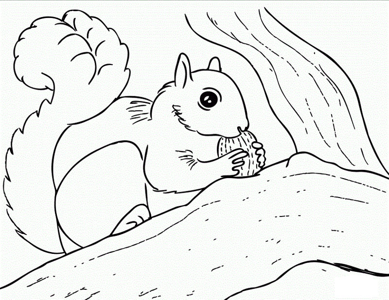 Squirrel Coloring Pages Kids 001