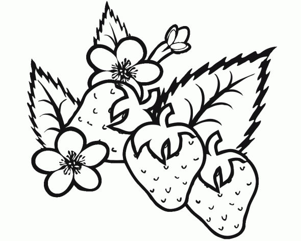Strawberry Plant Coloring Pages 001