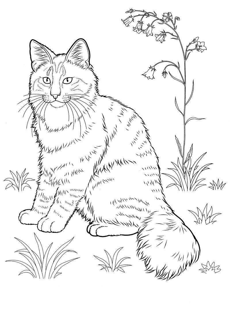Striped Cat Coloring Pages For Adults