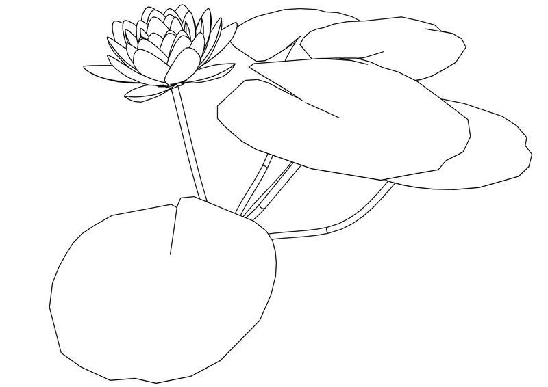 Suiren Flower Coloring Page