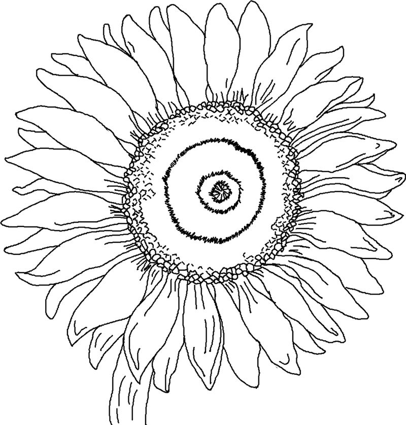 Sunflower Coloring Page 001