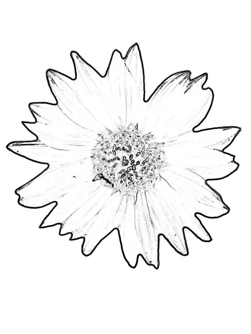 Sunflower Coloring Pages 001