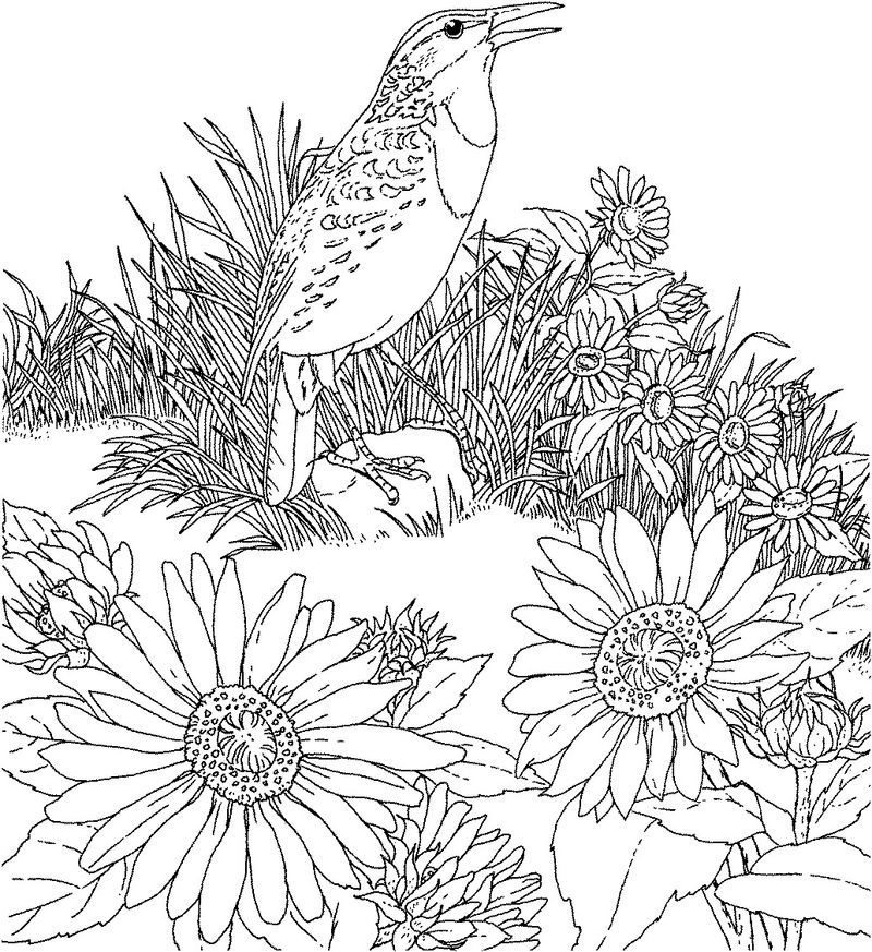 Sunflower Coloring Pages To Print 001