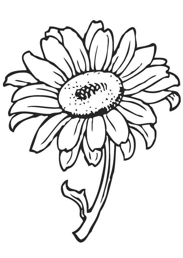 Sunflower To Color 001