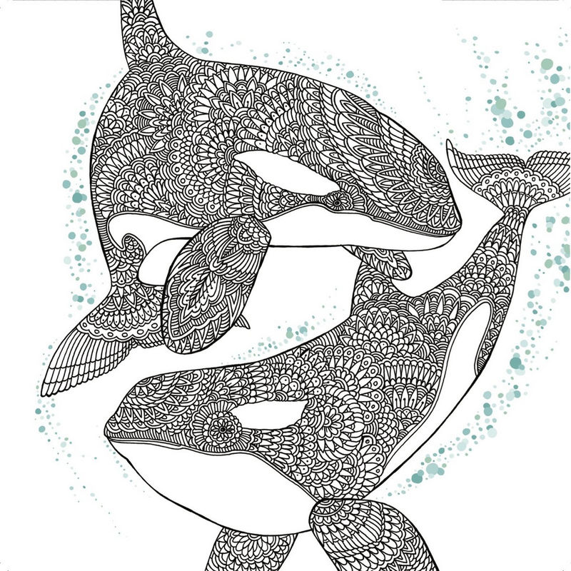 The Aquarium Marine Portraits Coloring Book Dolphin