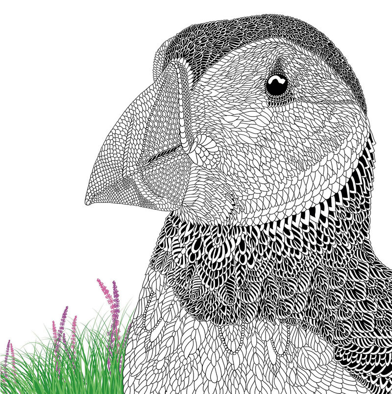 The Aviary Bird Portraits Coloring Book Puffins