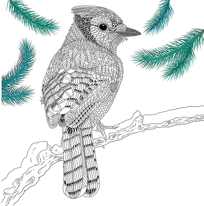The Aviary Bird Portraits Coloring Book