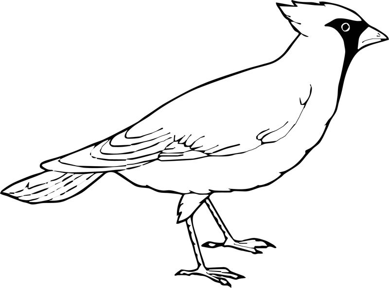 This Bird Coloring Page