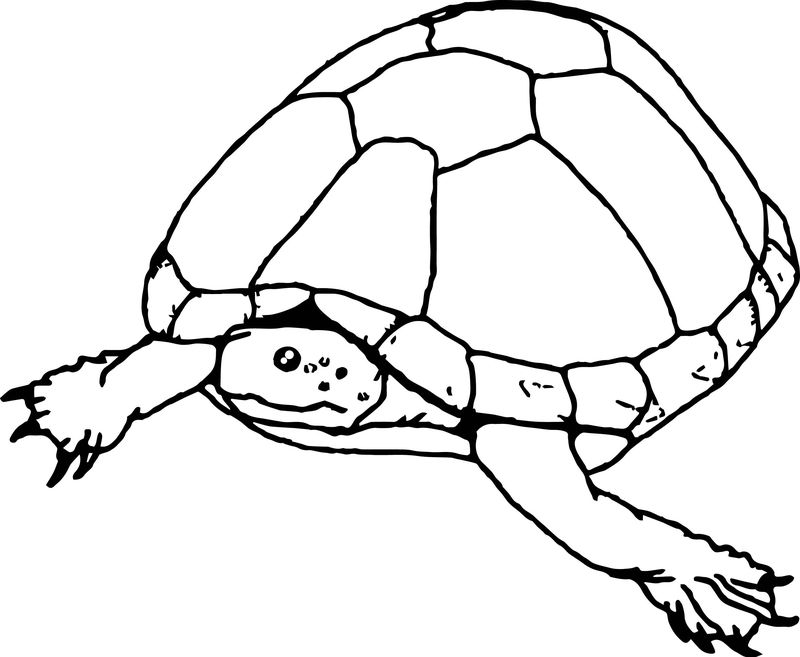 Tortoise Turtle Go Sea Coloring Page
