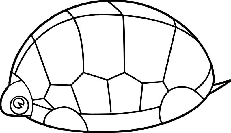 Tortoise Turtle Guard Coloring Page