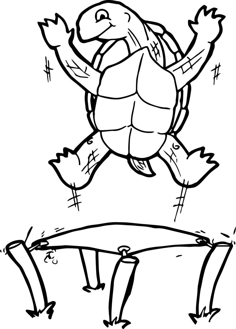 Tortoise Turtle Jump Coloring Page