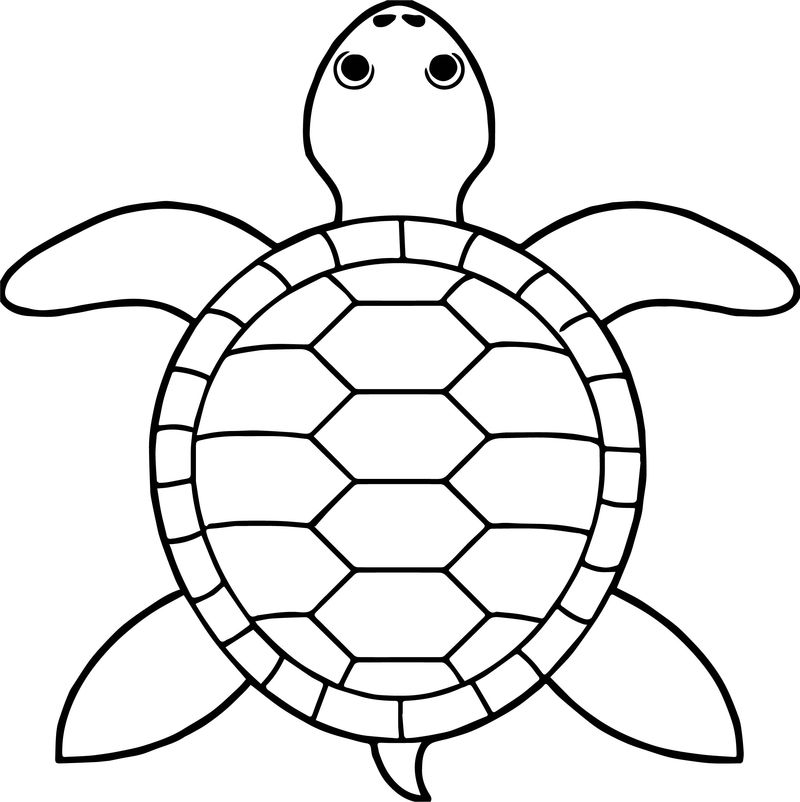 Tortoise Turtle Top View Coloring Pages