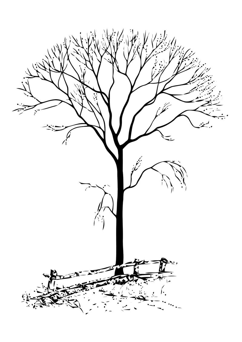 Tree Without Leaves Coloring Page - Coloring Sheets