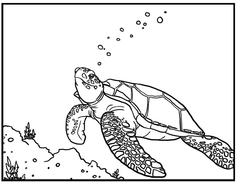 Turtle Coloring Pages Images