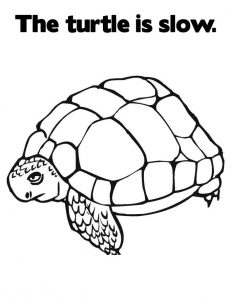Turtle printable coloring pages