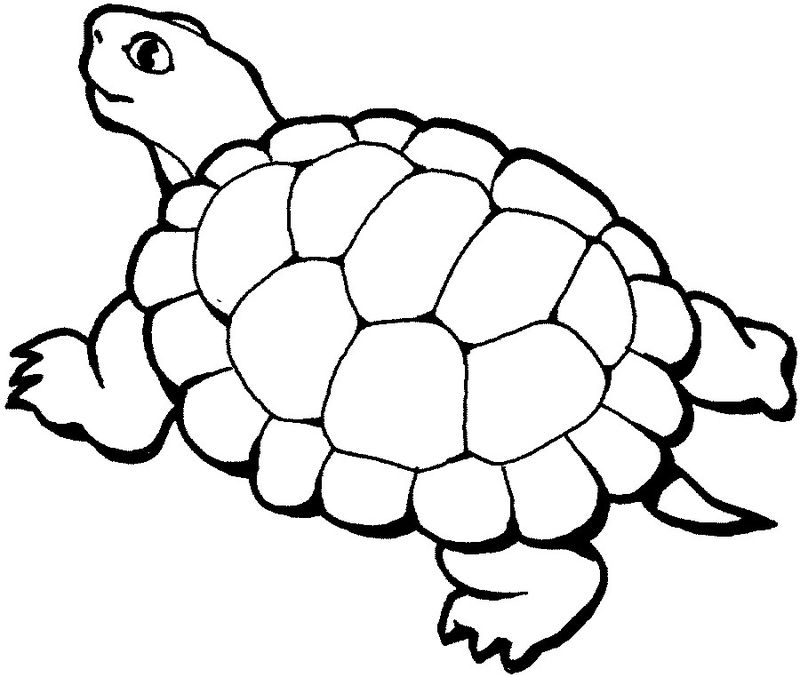 Turtles Coloring Pages