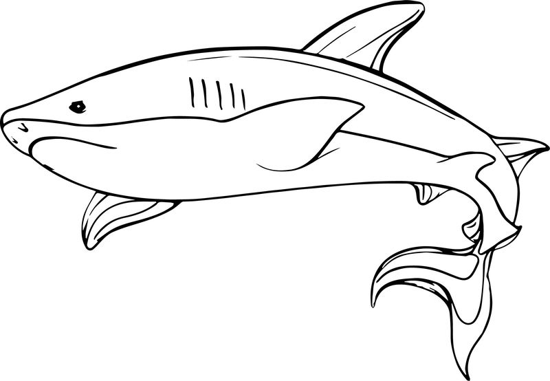 Underwater Shark Coloring Page