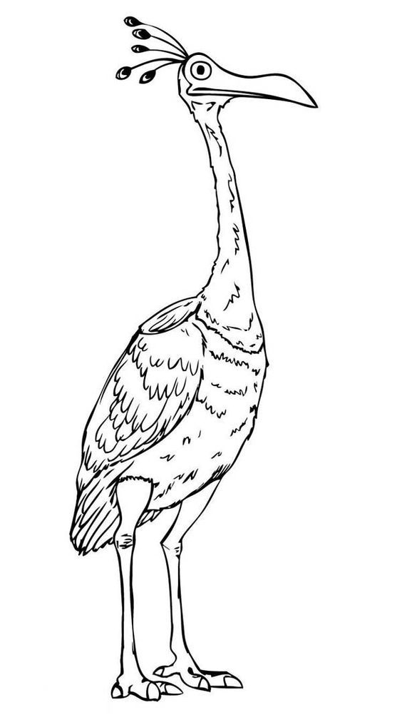 Up Coloring Pages Bird