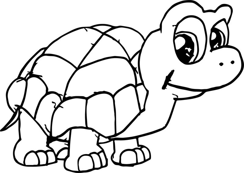 Waiting Tortoise Turtle Coloring Page