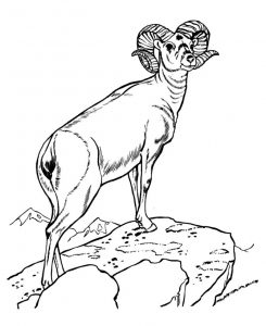 Wild animal coloring pages ram