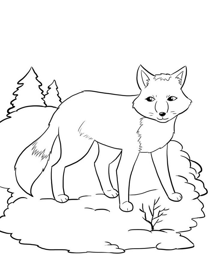 Winter Coloring Pages Animals