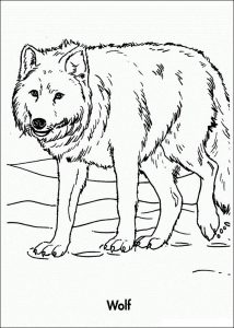 Wolf color pages