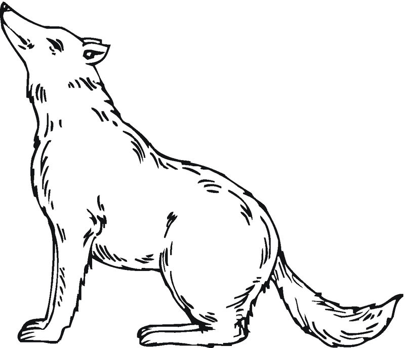 Wolf Coloring Pages To Print