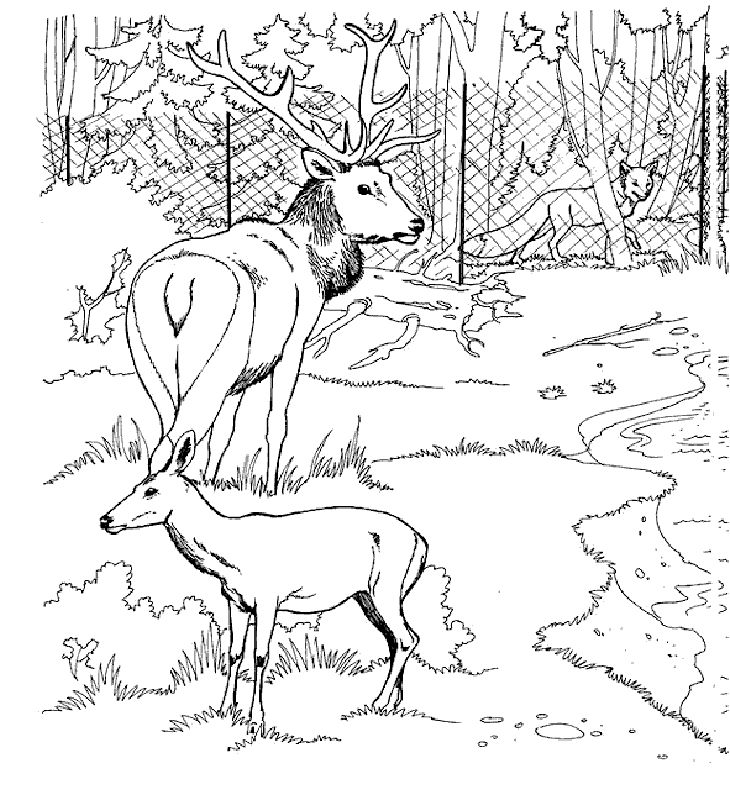 Zoo Coloring Pages For Kids Printable